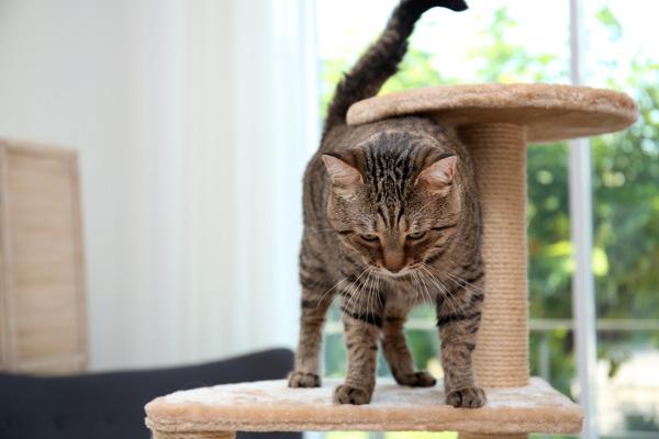 cat climbing a cat tree