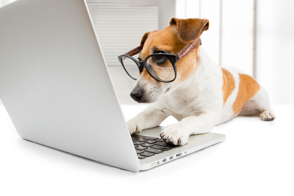 dog on computer with owner