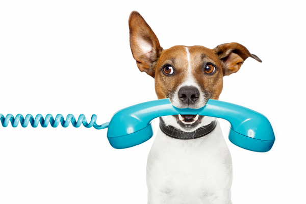 dog talking on phone