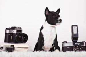 dog with a camera