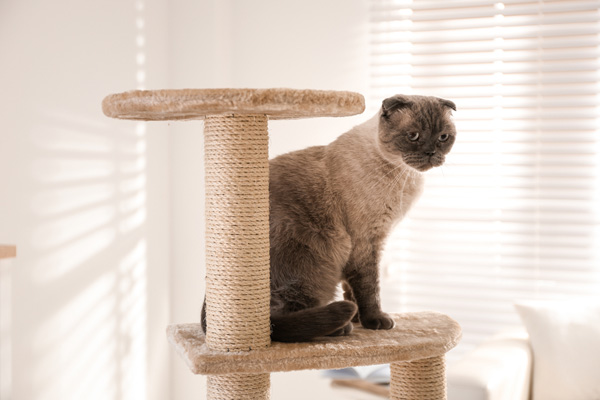 image of a cat enjoying his cat tree