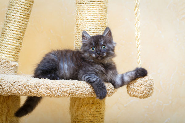image of a cat in their cat tree