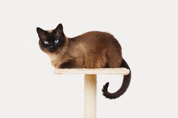 image of a cat on a cat tree