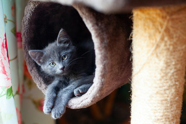 image of a cat tree with a kitten on it