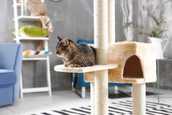 image of a large cat tree