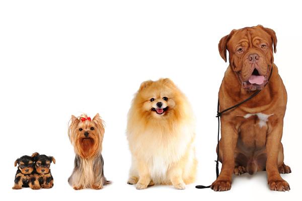 different dog girths