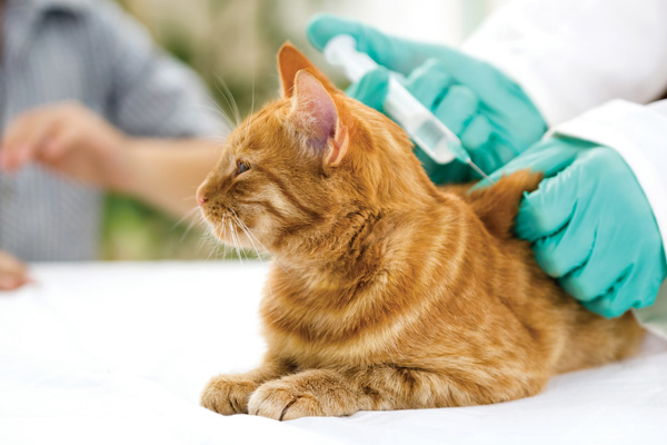 giving insulin to a cat with diabetes