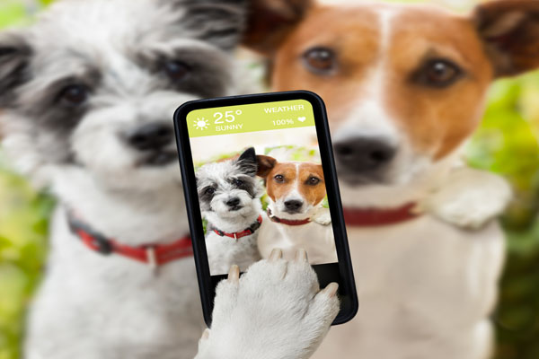 image of a pet cam with dogs taking selfies