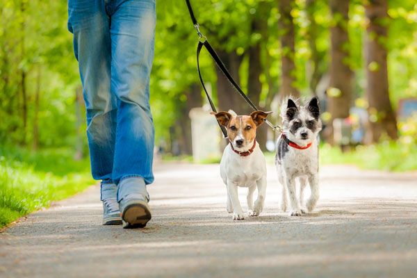walking the dog with a collar on