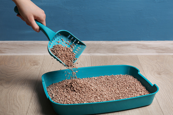 Changing Cat Litter