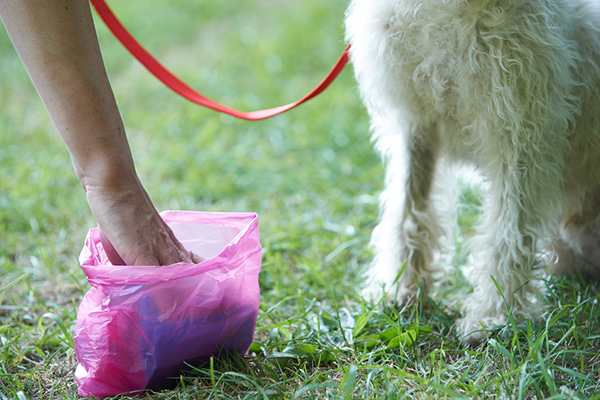 How to Pick-Up Dog Poop