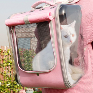 cat in a cat carrier backpack