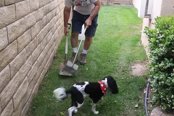 cleaning up dog poop