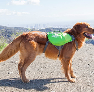 Daypak Dog Backpack Hiking Gear