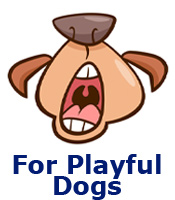 For Playful Dogs