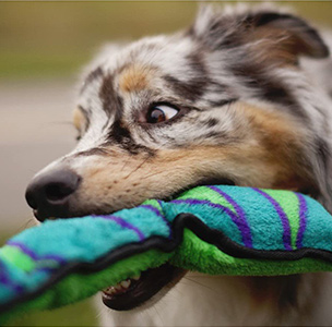 Outward Hound Snake Dog Toy