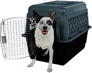 Aspen Pet Porter Pet Carrier Review