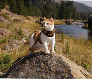 Kitty Holster Cat Harness Review