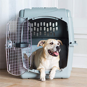 Petmate Dog Crate Carrier