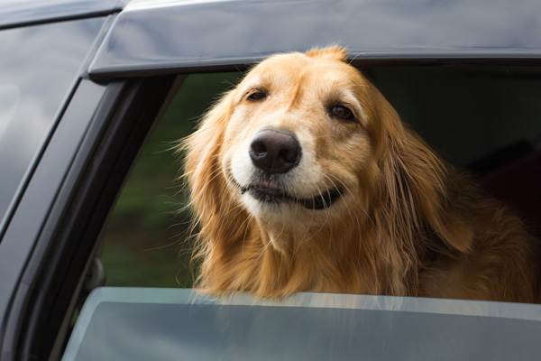 how to secure dog crate in car