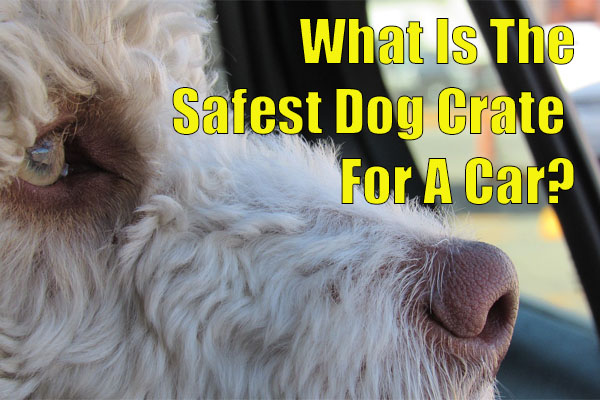 what is the safest dog crate for a car