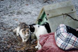How to get outdoor cats to go in a cat house for warmth