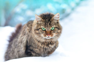 How to heat an outdoor cat house