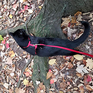 PUPTECK H-Style Cat Harness Review