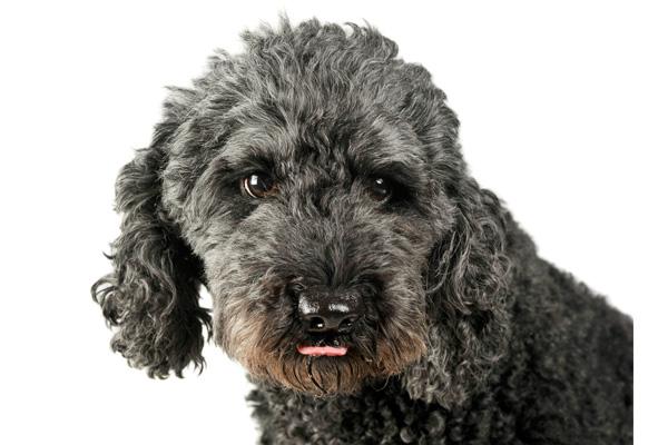 Pumi Dog Care