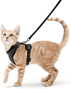 Rabbitgoo Cat Harness Review