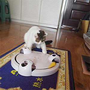 Running Pet Kitty Toy