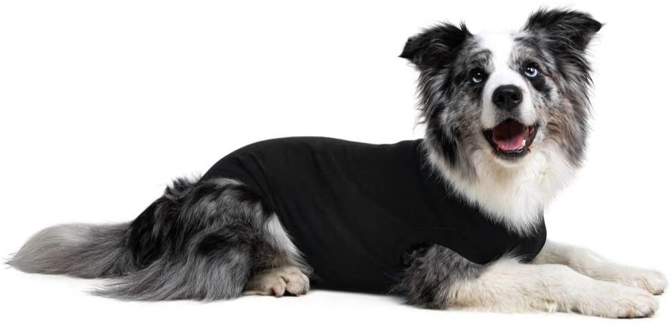 Suitical Recovery Suit Being Fashioned By Pup