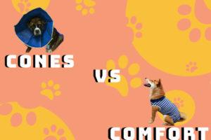 Cones vs comfort 2