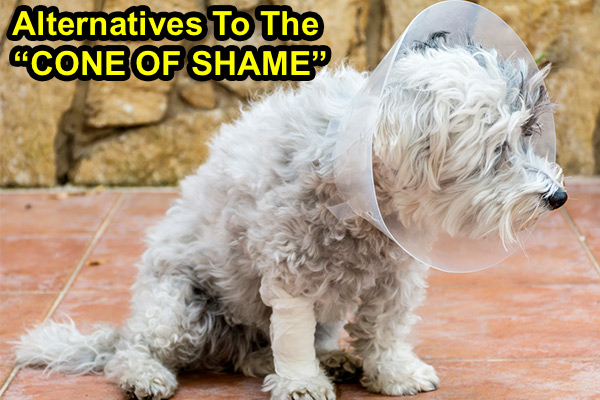 alternatives to the cone of shame