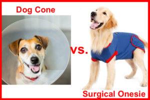 dog cone vs surgical onesie