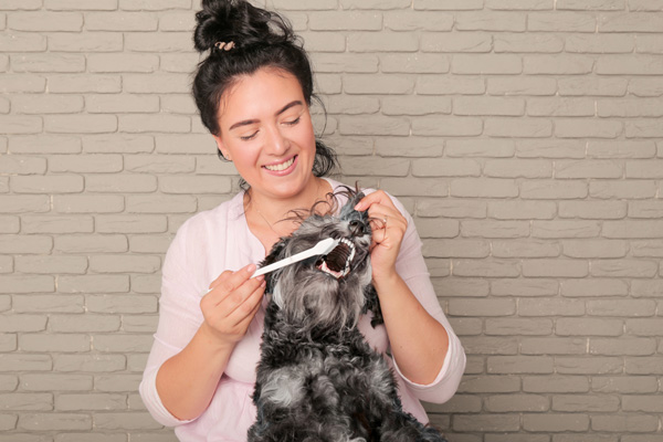 woman using a toothbrush to clean her dog's teeth