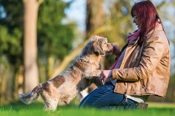 dog training with treats