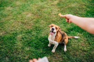 training a dog using dog treats