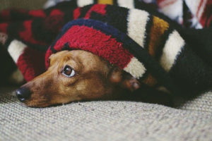 Can dogs sleep in sweaters