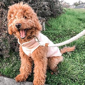 Gooby Small Dog Vest