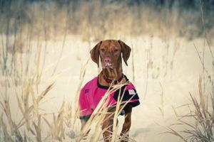 should dogs wear sweaters